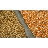 Матрицы линий ГМО сои и кукурузы